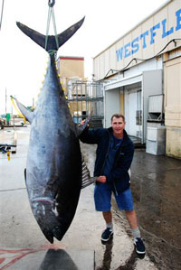 August 2006 saw some pioneering blue water spearfishing off New Zealand's West Coast. Five Pacific Blue Fin Tuna up to 292 kg were landed by New Zealand blue water spearfisherman.